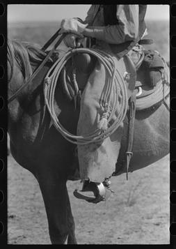 """8"""" x 10"""" Photo Regalia and equipment of the cowboy. Cattle r"""
